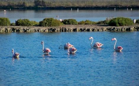 Parque Natural de Ses Salines Ibiza